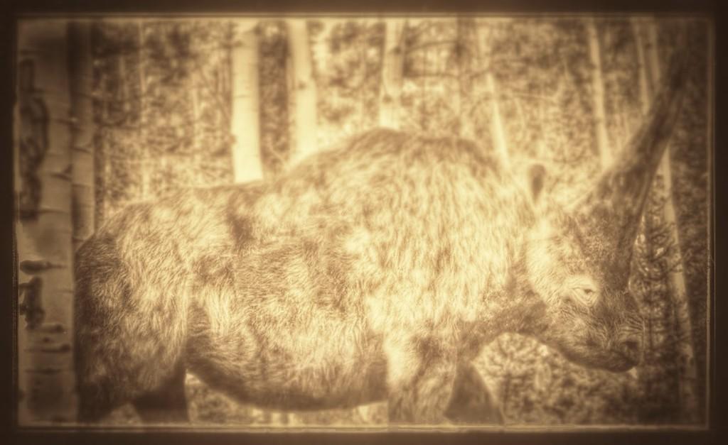 Elasmotherium_-Thin_Plate_Beast-.jpg