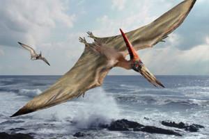 65 milló éve Kihalt Pteranodont vettek videóra?