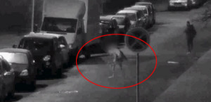 Farkasember támadt a rendőrökre Csehországban!