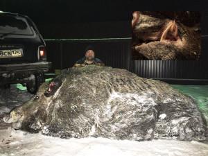 Gigászi vaddisznót lőttek az Urálban