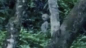 Idegen lényt filmeztek a brazil őserdőben