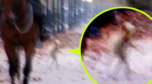 Földönkívüli lény sétált az utcán fényes nappal Chilében!