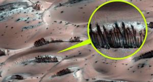 Itt a bizonyíték: Növényi élet van a Marson!