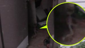 Fészerben rejtőzködő földönkívüli támadt egy kislányra!
