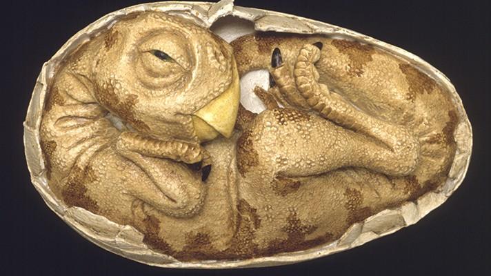 OviraptorEmbryo