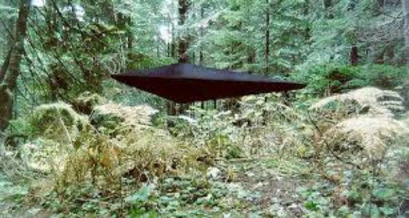 Reed-UFO-631838