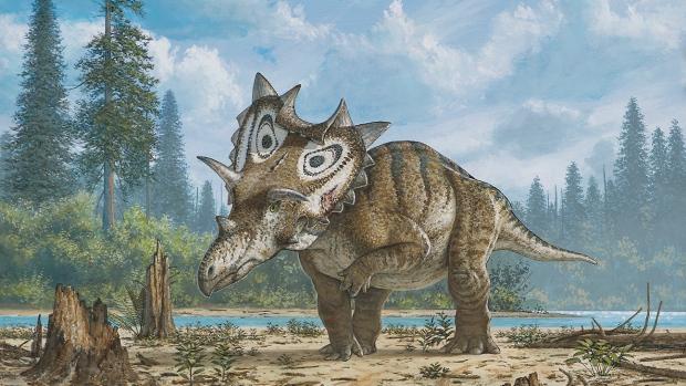 judith-horned-dinosaur
