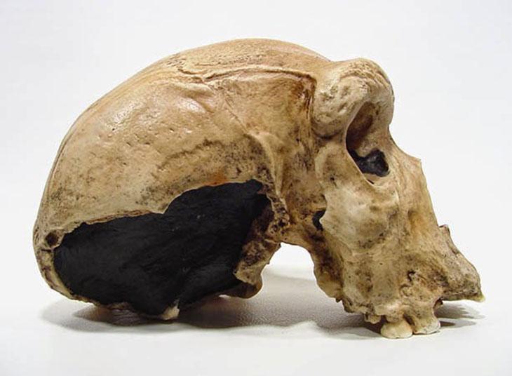 skull_2-1