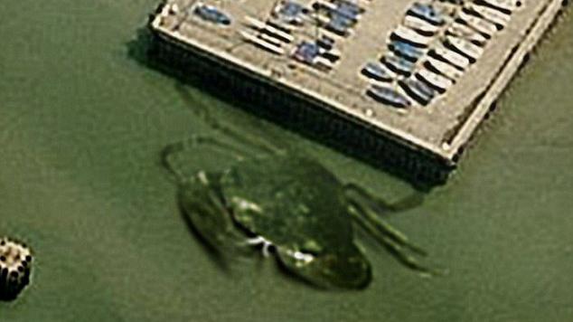 crabzilla-napiufo