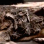 Megkövesedett lényt találtak a Marson