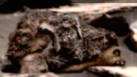 mars-medve-napiufo