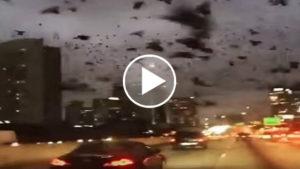 Apokaliptikus madárinvázió Houstonban – videó