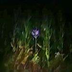 Földönkívülit videózott egy farmer a kukoricaföldjén – Szerinted valódi?