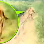 Rejtélyes emberszabású törpe lény szaladt bele a szumátrai motorosok off-road videójába