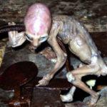 Órákon keresztül fojtogatta a földönkívülit a megrémült mexikói gazda