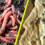 Igaz lenne? A NASA robotszondája ősi féregfosszíliát fotózott a Marson