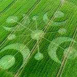 Rejtélyes gabonakörök jelentek meg Cerne Abbas búzamezőin