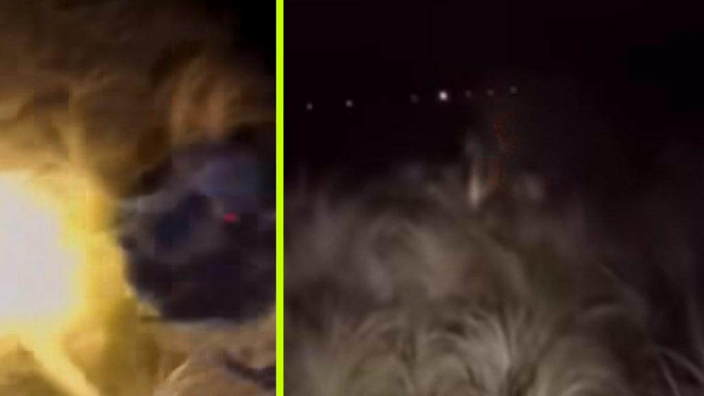 Kis híján egy földönkívüli karjaiba sétált videózás közben a halálra rémült biztonsági őr