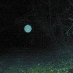 Titokzatos energiagömböt vett fel egy vadfigyelő kamera
