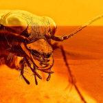Egy entomológus azt állítja, hogy rovarok élnek a Marson