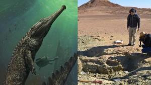 Gigászi őskrokodil koponyájára bukkantak Tunéziában