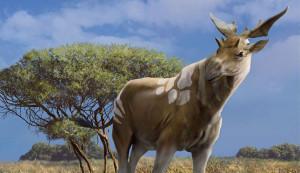 Tízezer éve kihalt zsiráf volta világ legnagyobb kérődzője