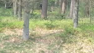 Hátborzongató lény leselkedett a kirádulók után egy holland erdőben
