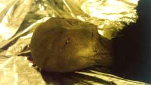 A fridzsiderből szökött meg az agyoncsapott ufonauta