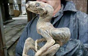 Különös lény megkövesedett tetemét hozták fel az orosz gyémántbányából
