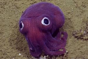 Bizarr lényre bukkantak a tenger fenekén