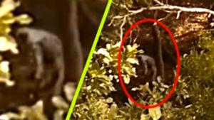 Hüllőszerű földönkívüli lény sétált bele az erdei panorámavideóba