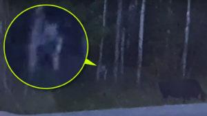 Ragadozóként vadászó földönkívülit videóztak a kanadai erdőségben
