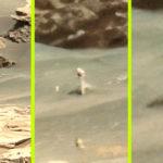 Egy NASA fotón fedezték fel: Fehér rózsa bimbózik a Marson